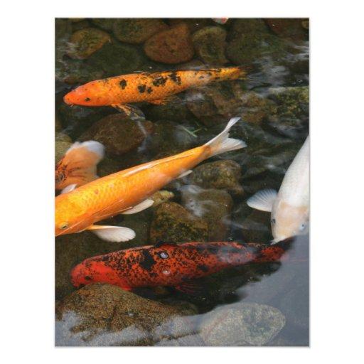 Pescados de Koi en fotografía de la charca Invitaciones Personalizada