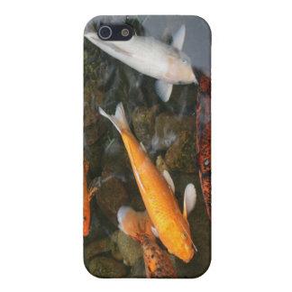 Pescados de Koi en fotografía de la charca iPhone 5 Carcasa