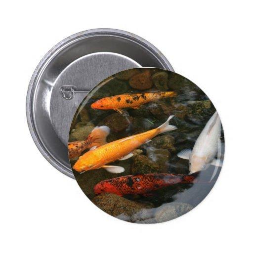 Pescados de Koi en fotografía de la charca Pin