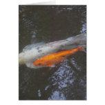 Pescados de KOI en la charca Tarjeton