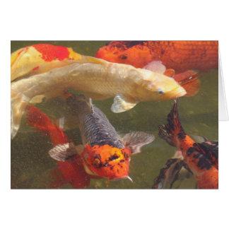 Pescados de Koi Tarjeta De Felicitación