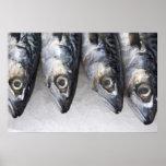 Pescados de la caballa, captura fresca del día poster