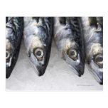 Pescados de la caballa, captura fresca del día tarjeta postal