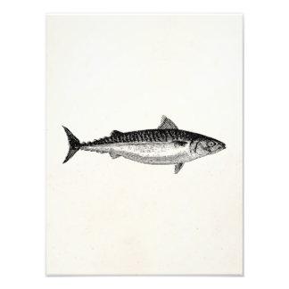 Pescados de la caballa común del vintage - fotografías