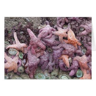Pescados de la estrella de la marea baja - Customz