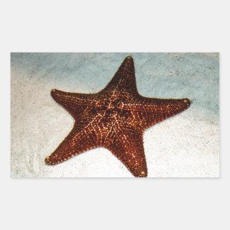 Pescados de la estrella pegatina rectangular