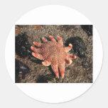 Pescados de la estrella pegatina redonda