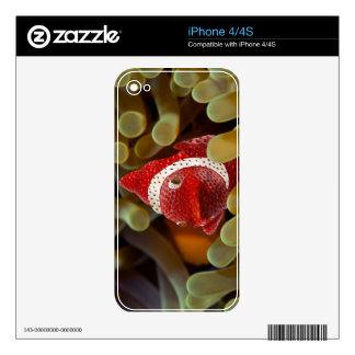 pescados de la fresa iPhone 4 calcomanía