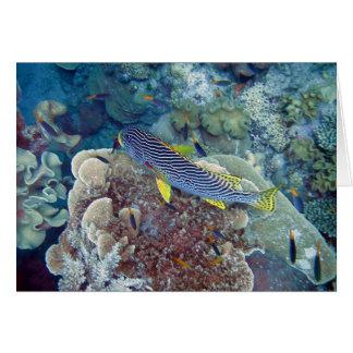 Pescados de la gran barrera de coral tarjeta de felicitación