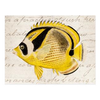 Pescados de la mariposa del mapache del vintage -  postal