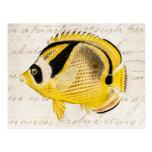 Pescados de la mariposa del mapache del vintage -  tarjeta postal
