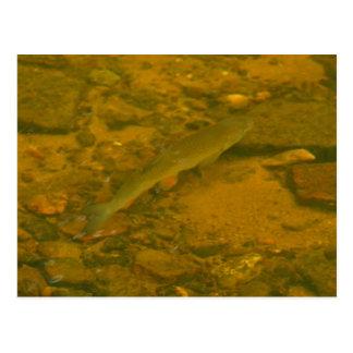 pescados de la natación postal