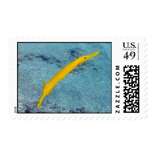 Pescados de la trompeta amarilla de Hawaii Sellos