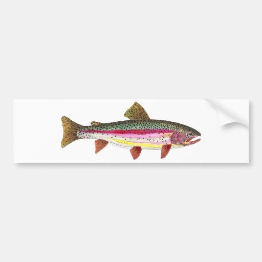 Pescados de la trucha arco iris pegatina de parachoque