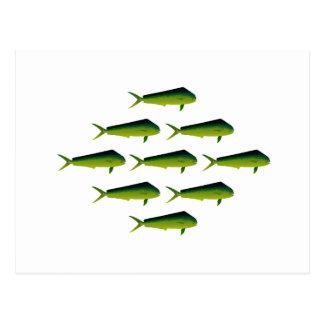 Pescados de Mahi Mahi - delfín - Dorado Tarjeta Postal