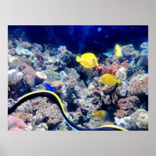 pescados de neón amarillos póster