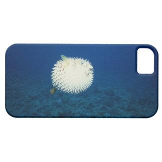 Pescados de puerco espín iPhone 5 carcasas