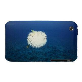 Pescados de puerco espín iPhone 3 Case-Mate carcasa