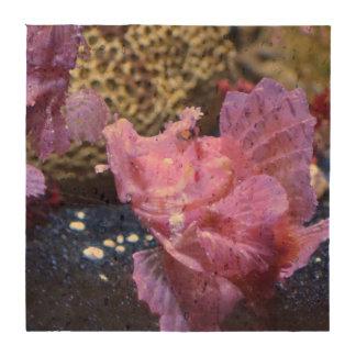 Pescados de Rhinopias Posavasos