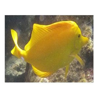 Pescados de Tang del amarillo de Hawaii Tarjetas Postales
