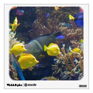 Pescados del arrecife de coral