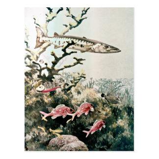 Pescados del Barracuda y del filón Tarjetas Postales