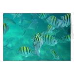 Pescados del Caribe Tarjeta