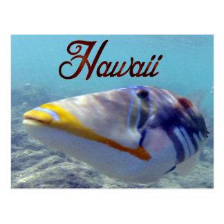 Pescados del estado de Hawaii - Humuhumunukunukuap Postales
