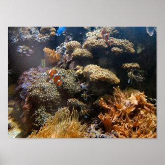 Pescados del filón - Clownfish Póster