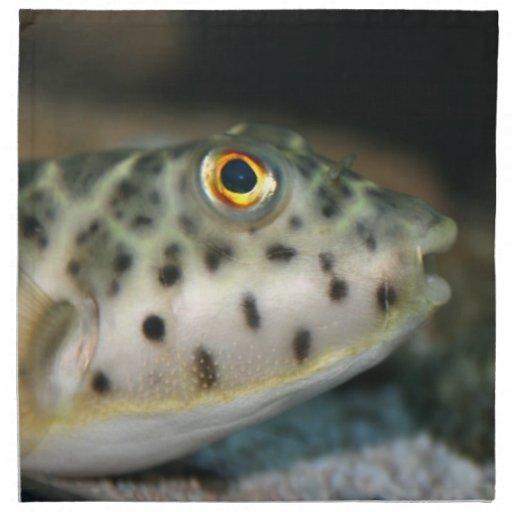 pescados del fumador que hacen frente a eye.jpg am servilletas imprimidas