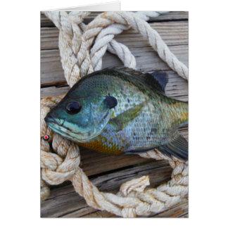 Pescados del Lepomis macrochirus en muelle y Tarjeton