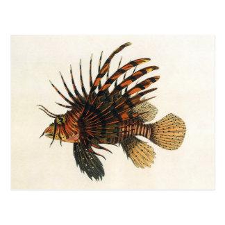 Pescados del Lionfish del vintage, animal marino Postales