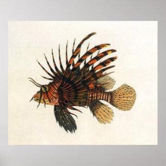 Pescados del Lionfish del vintage, animal marino Póster
