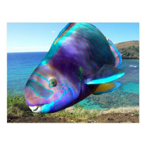 Pescados del loro de Oahu Hawaii de la bahía de Postal