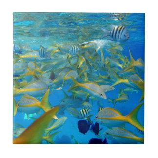 Pescados del océano azulejo cuadrado pequeño