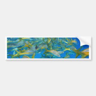 Pescados del océano etiqueta de parachoque