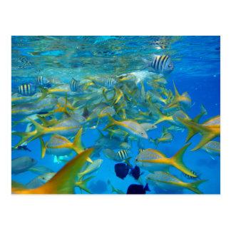 Pescados del océano postal