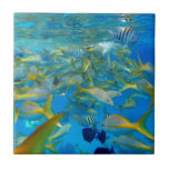 Pescados del océano tejas  ceramicas