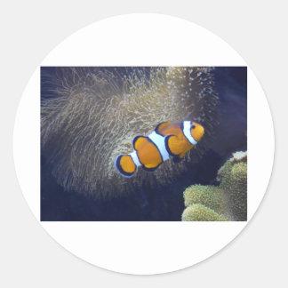 pescados del payaso, 2 pegatina redonda