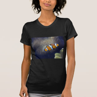 pescados del payaso, 2 camisetas