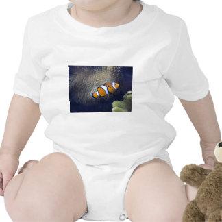pescados del payaso, 2 trajes de bebé