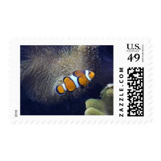 pescados del payaso, 2 envio