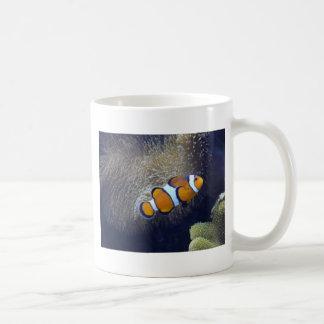 pescados del payaso, 2 taza de café