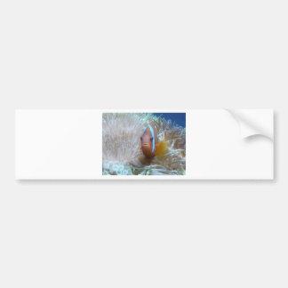 pescados del payaso en anémona pegatina para auto