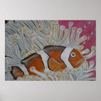 pescados del payaso en coral póster