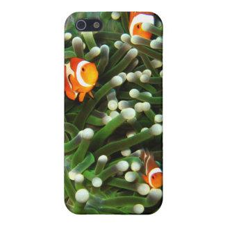 Pescados del payaso en el jardín coralino de iPhone 5 carcasas