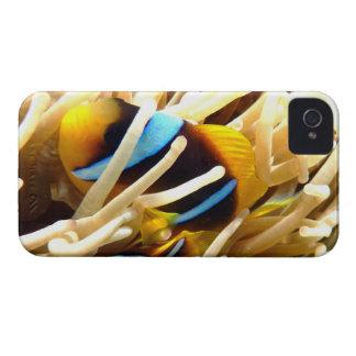 Pescados del payaso iPhone 4 fundas