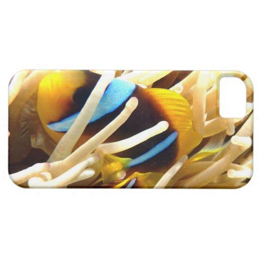 Pescados del payaso iPhone 5 coberturas