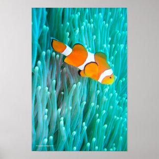 Pescados del payaso poster