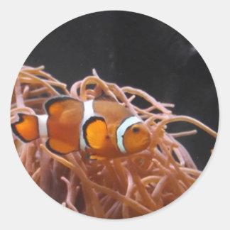 Pescados del payaso pegatina redonda